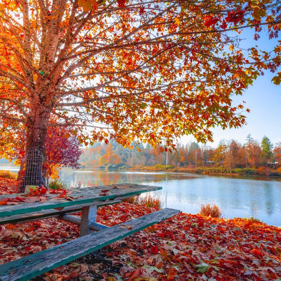 autunno quando inzia